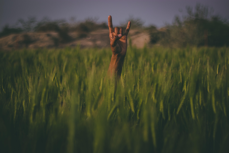 Kostenloses Stock Foto zu dämmerung, landschaft, natur, hände