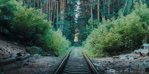 A Railroad Track Between Trees