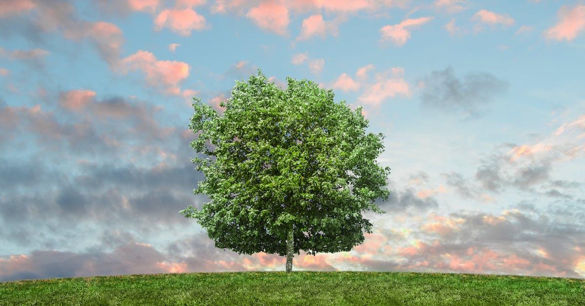 Солнышка, картинки красивые небо природа зеленая деревья