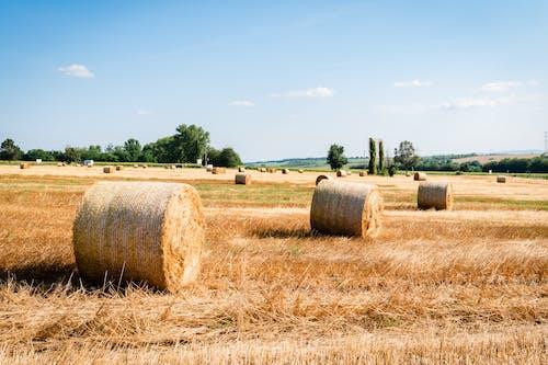 Gratis stockfoto met agrarisch, blauw, boerderij