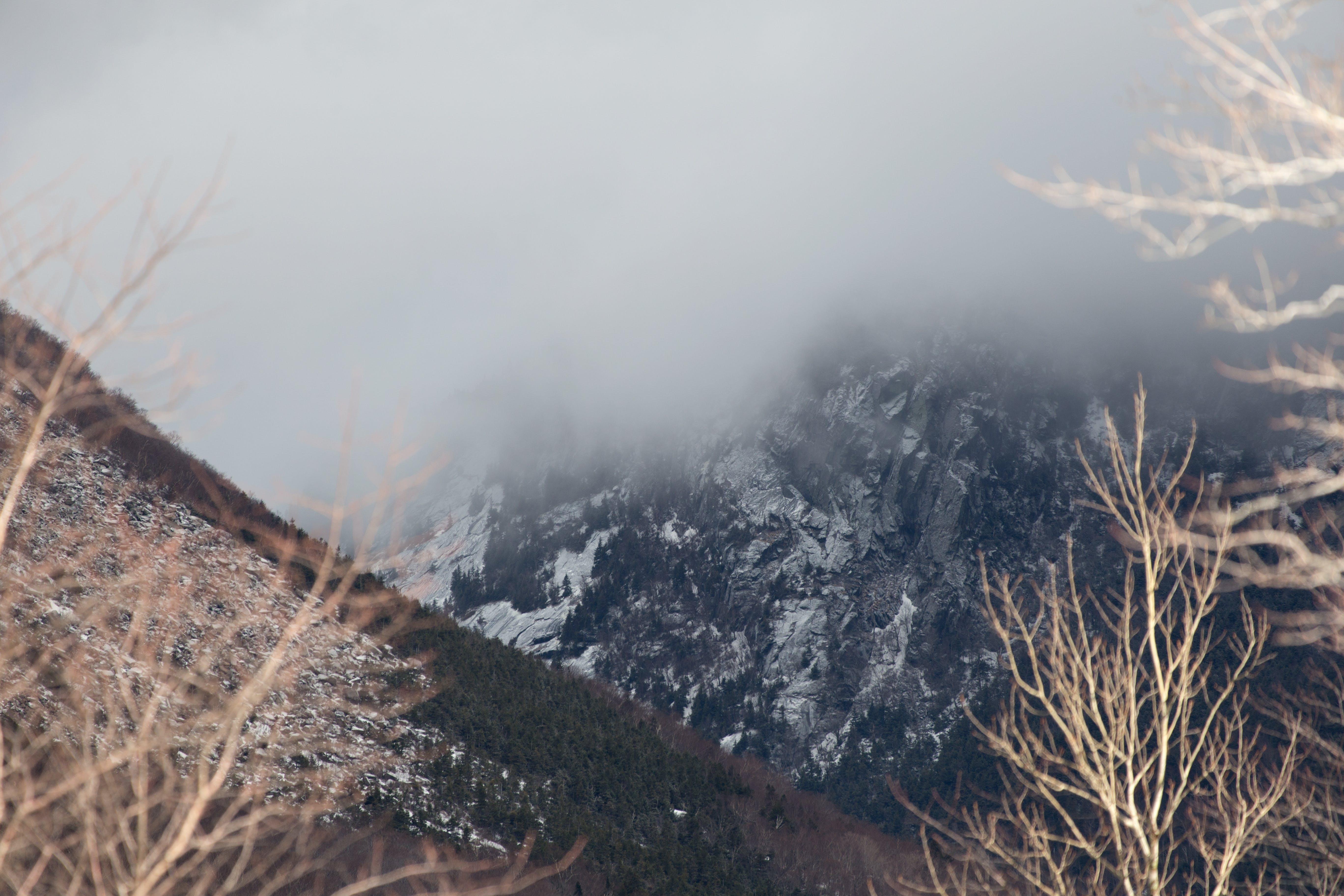 Darmowe zdjęcie z galerii z drzewa, góry, jasny, krajobraz