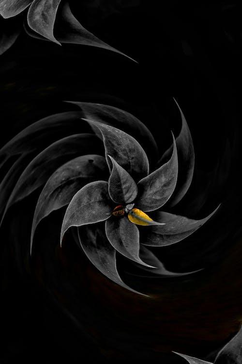 Бесплатное стоковое фото с HD-обои, бесплатные обои, брызги краски, красивые цветы
