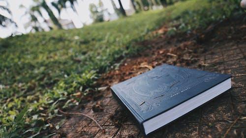 Ingyenes stockfotó alacsony szögű felvétel, esés, esik, fű témában