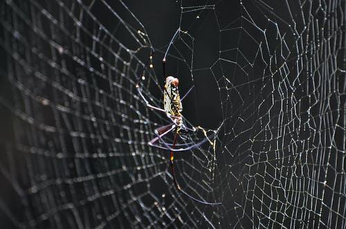 Gratis lagerfoto af edderkop, edderkoppespind