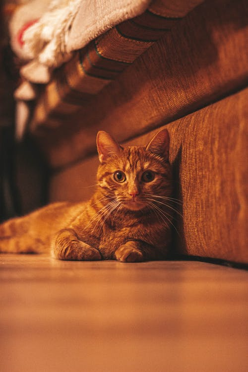 Close-Up Shot of a Tabby Cat Lying on the Floor