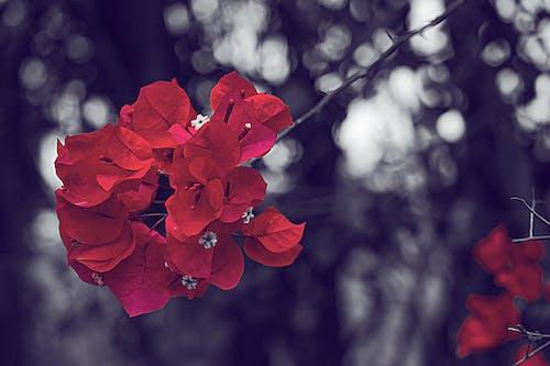雨后的红色花朵 的 免费素材照片