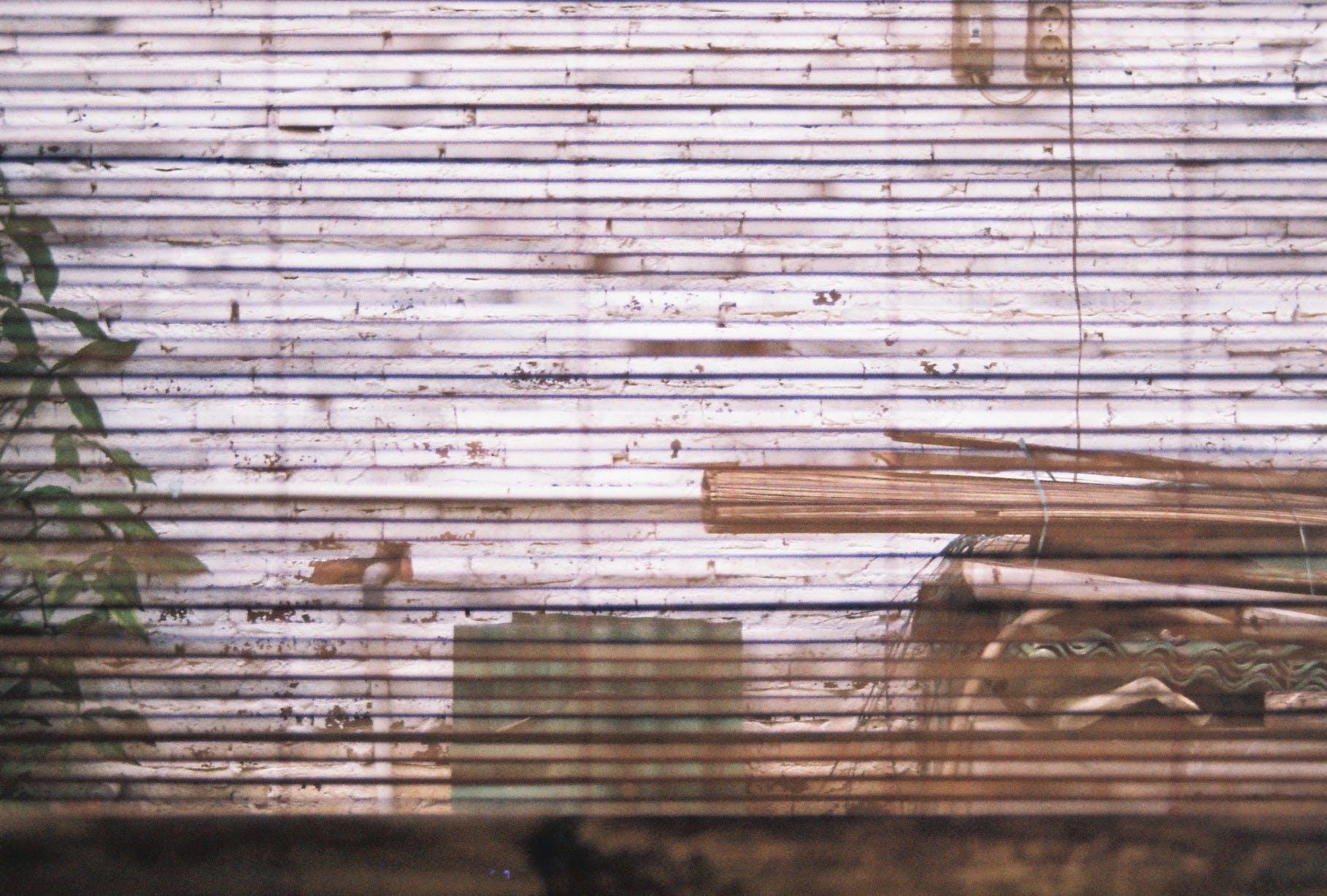 Free stock photo of analog, analog camera, bamboo, film photography
