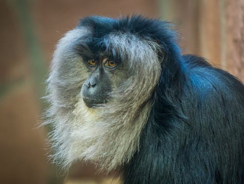 Kostnadsfri bild av däggdjur, djungel, djur, djurfotografi