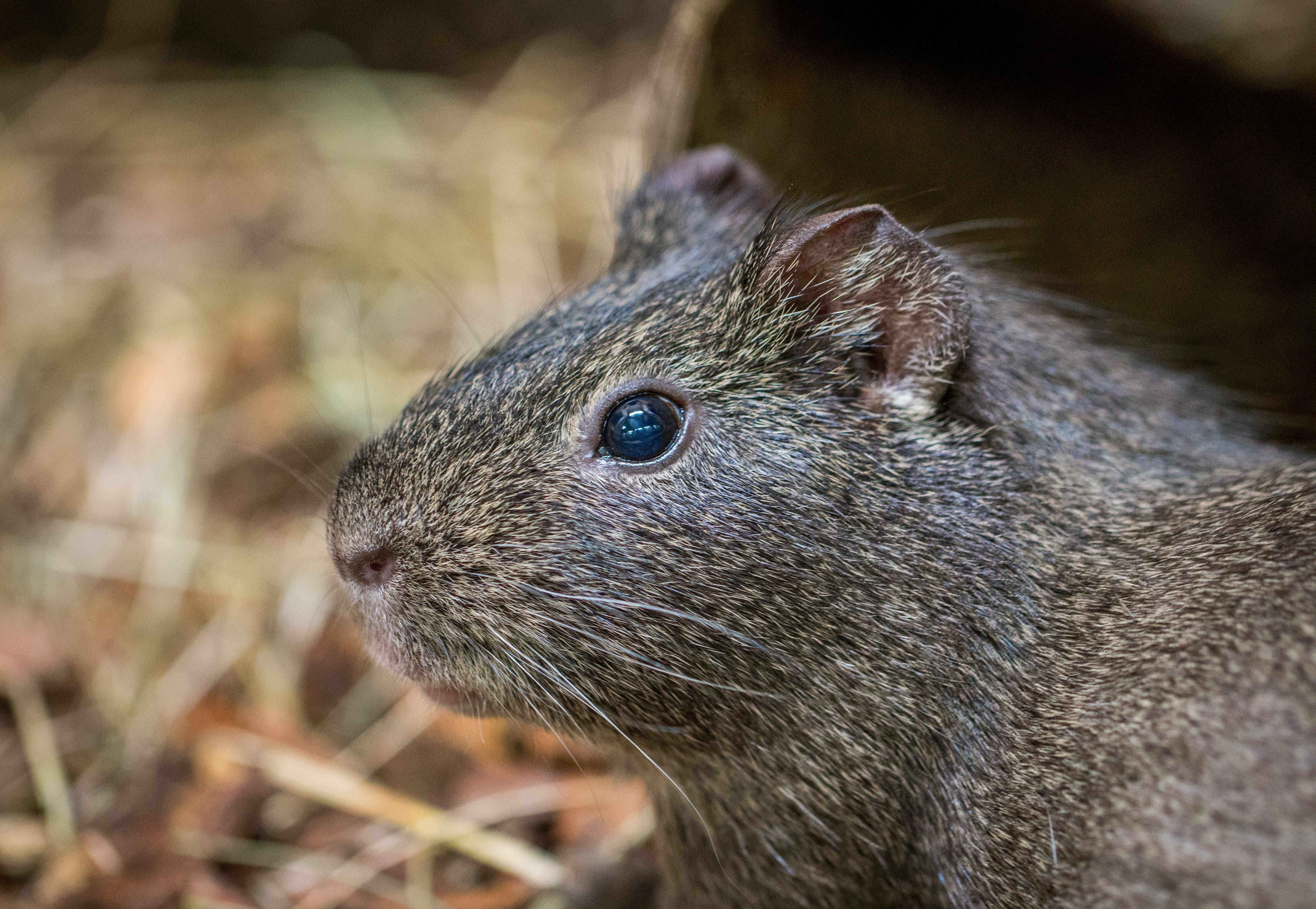Close-up Photography of Gray Rodent at Daytime