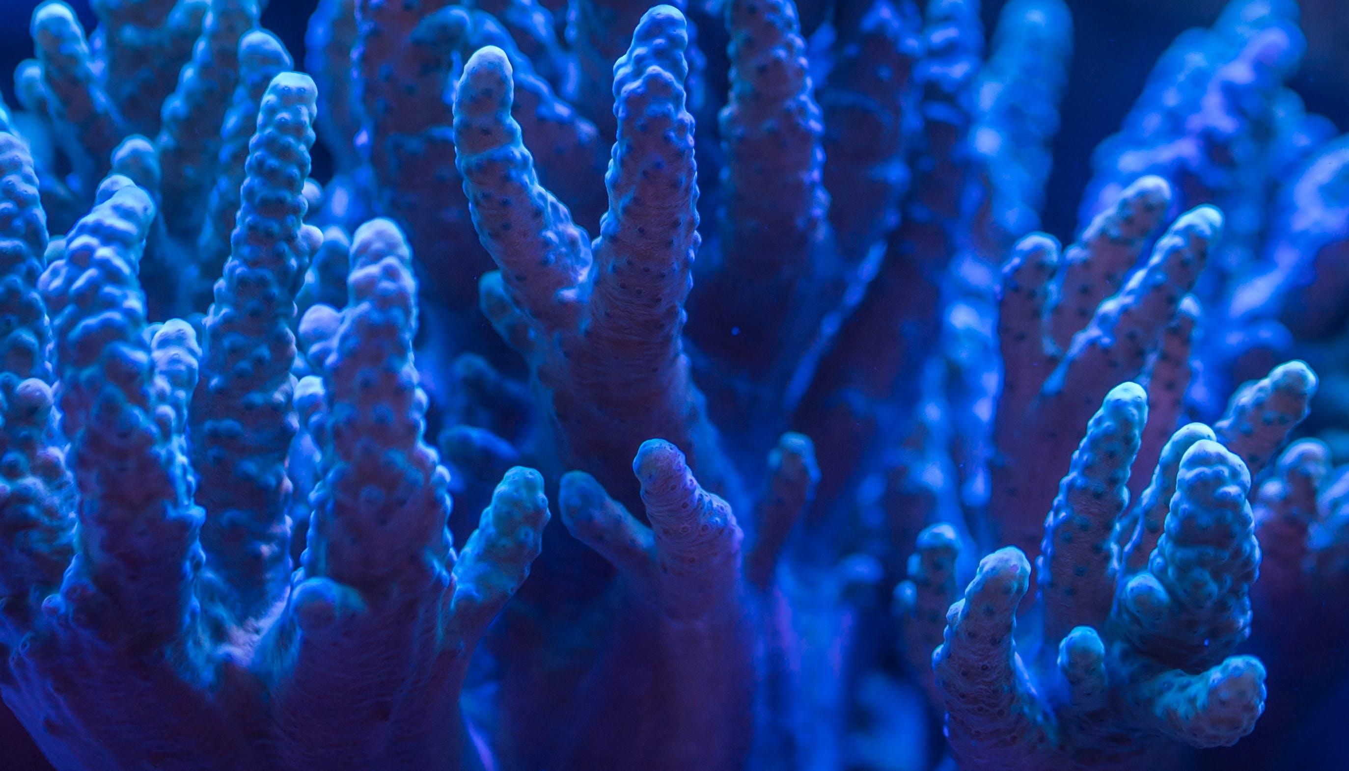 คลังภาพถ่ายฟรี ของ ทางทะเล, น้ำ, ปะการัง, พิพิธภัณฑ์สัตว์น้ำ
