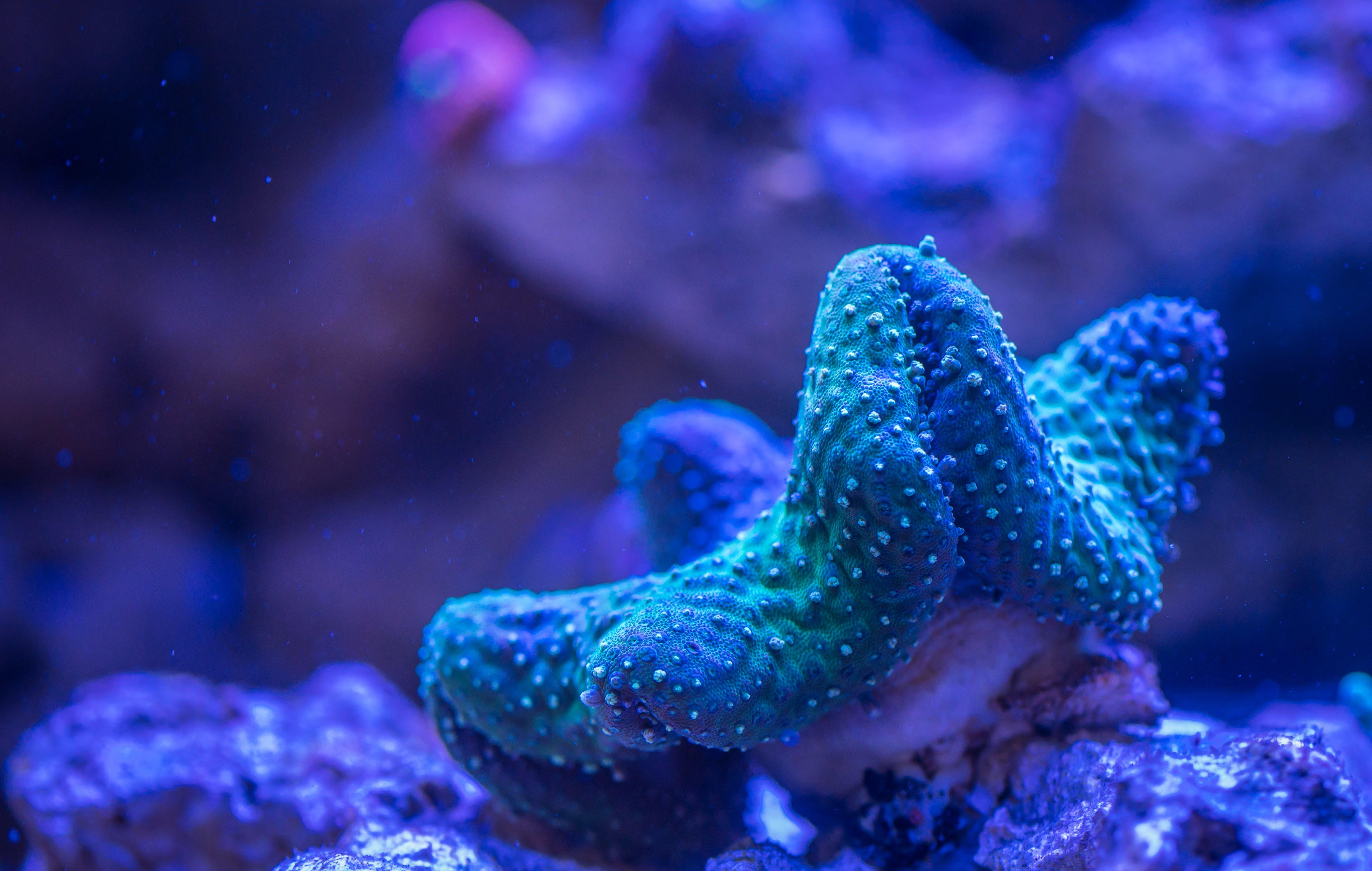 Бесплатное стоковое фото с Аквариум, вода, глубокий, коралл
