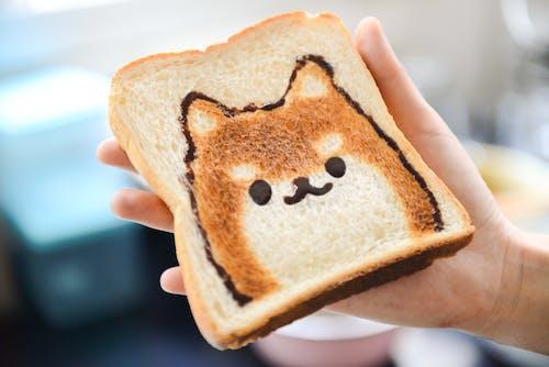 Imagine de stoc gratuită din adorabil, câine, coacere, delicios