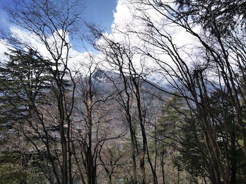 경과, 마날리, 바람, 시간의 무료 스톡 사진