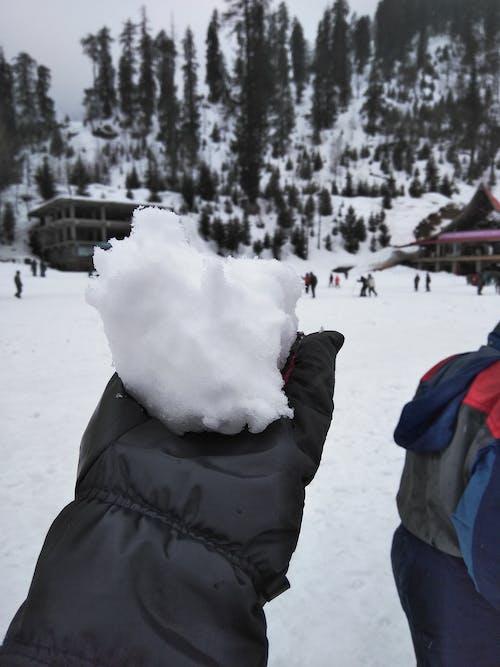 눈, 마날리, 손, 집중의 무료 스톡 사진