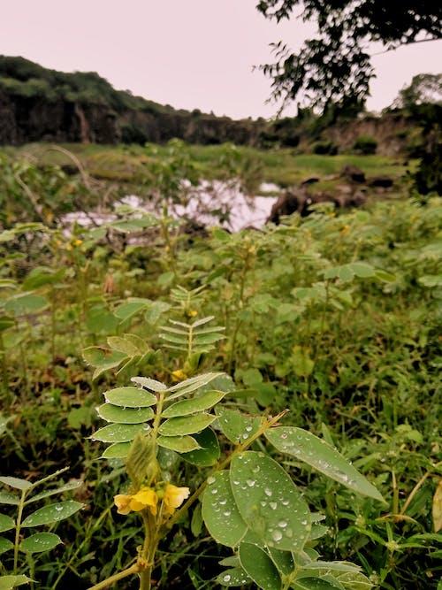 방울, 비, 비 내린 후, 식물의 무료 스톡 사진