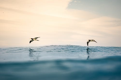 Two Birds Flying over Sea