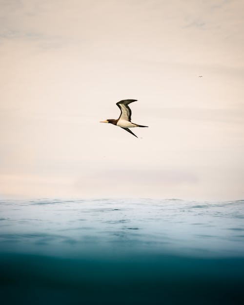 White and Black Bird Flying over the Sea