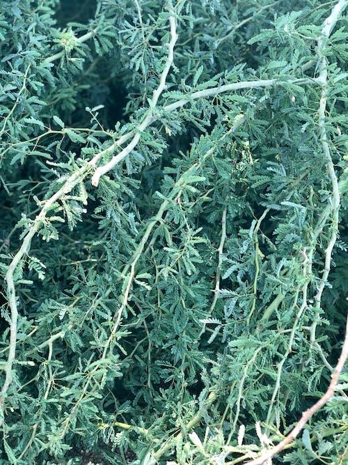 綠色, 葉子 的 免費圖庫相片