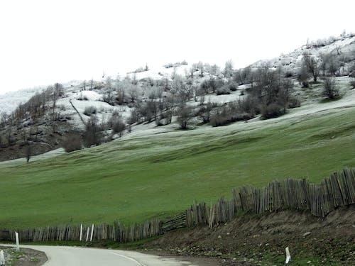 คลังภาพถ่ายฟรี ของ ครึ่งหิมะสีเขียวครึ่ง, สีเขียว, หิมะ