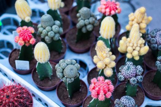 Different Types of Cactus