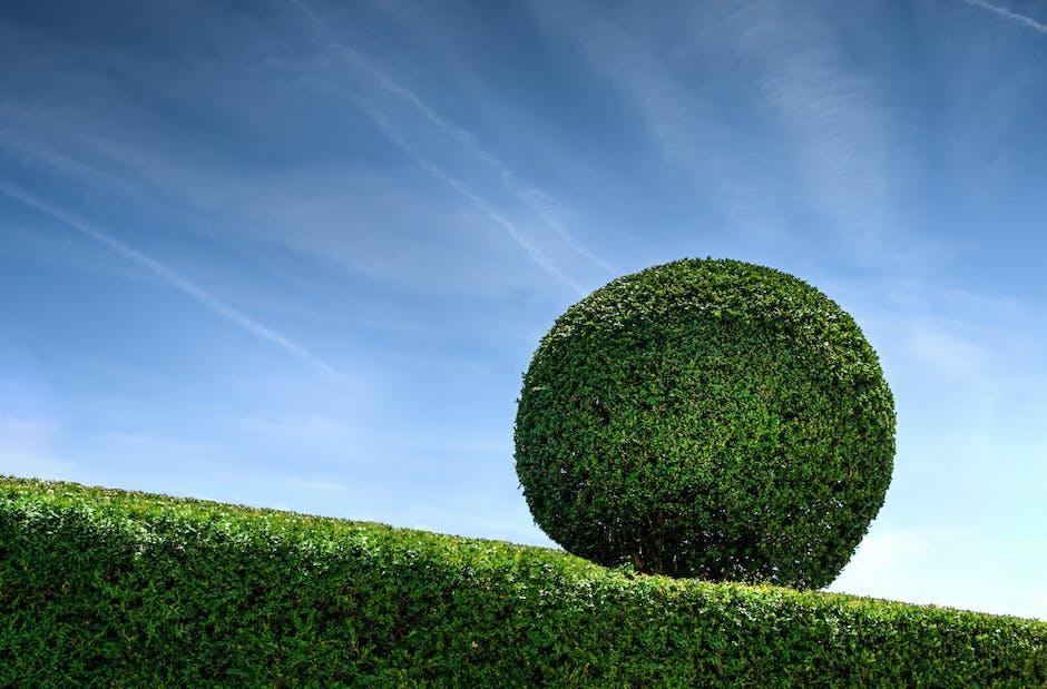 bush, garden, gardener