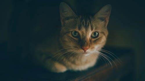 Ingyenes stockfotó állat, álló kép, aranyos, belföldi témában