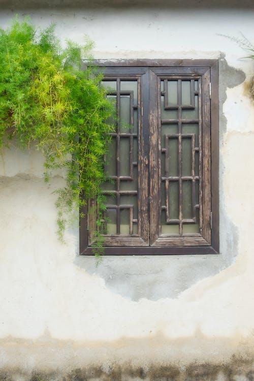 Green Tree Beside White Wooden Window