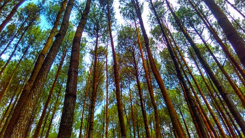 Free stock photo of beautiful, cell phone, cool, forest