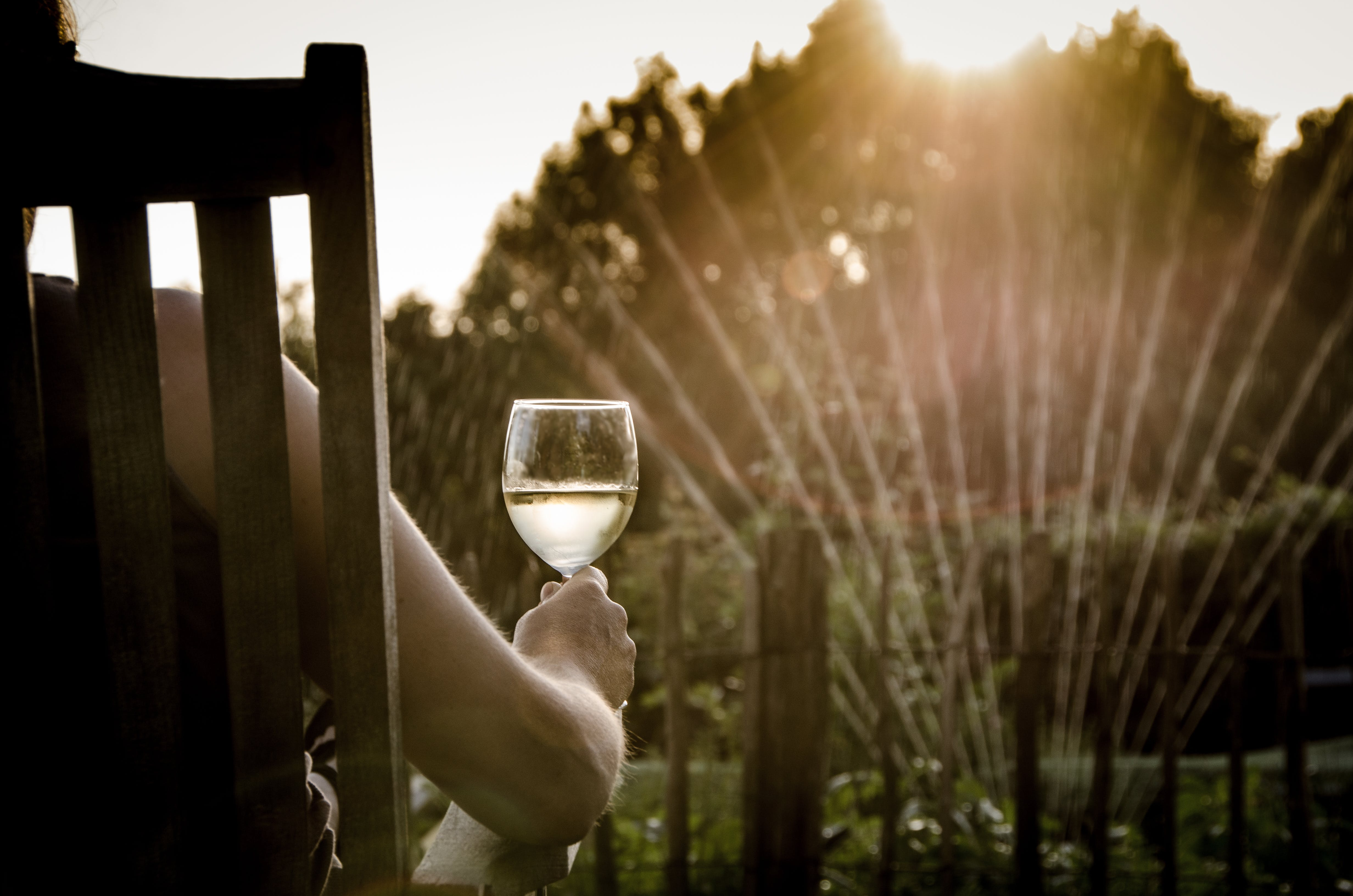 Person Holding Clear Wine Glass Facing Green Leafed Trees during Golden Hour