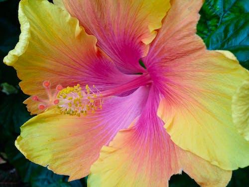 Darmowe zdjęcie z galerii z flor