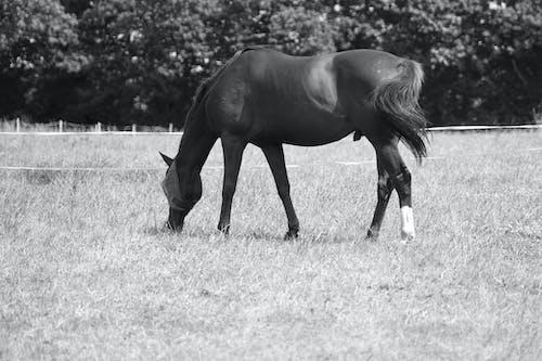 Photos gratuites de ã © quin, ã © talon, animal, cheval