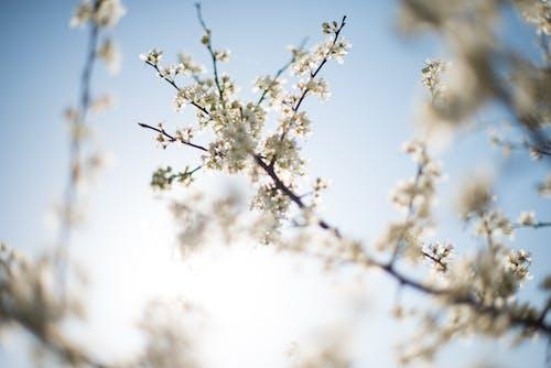 Бесплатное стоковое фото с белый фон, ветви, голубое небо, лепестки