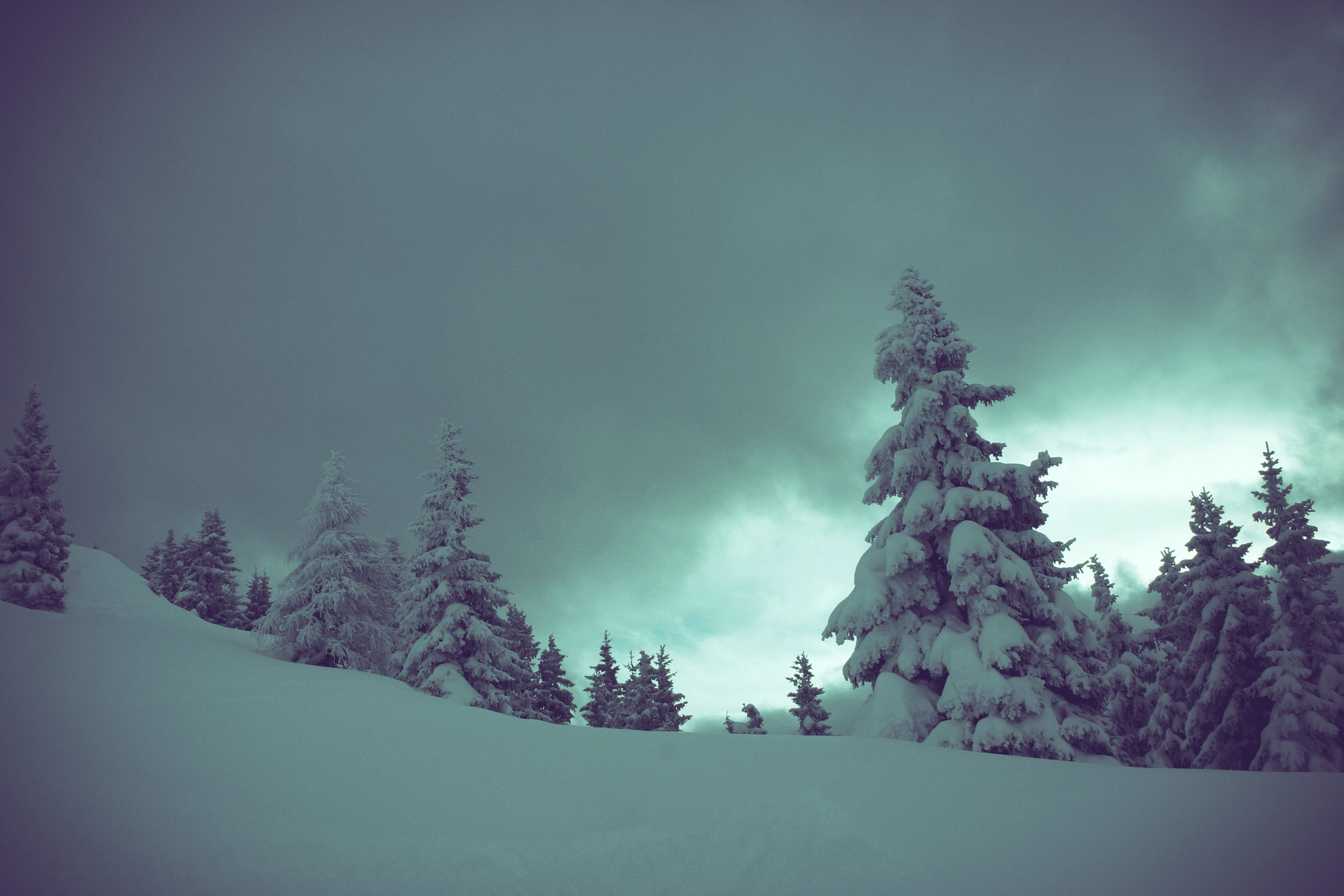 Snow Covered Pine Trees Under Cloudy Skies