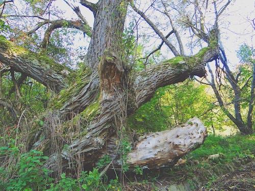 Gratis lagerfoto af skov, træ, træer