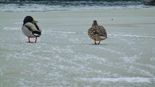 Gratis arkivbilde med frossen innsjø, is, vinter