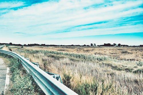 Бесплатное стоковое фото с голубое небо, голубые небеса, деревья, дневной свет