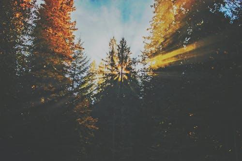 Imagine de stoc gratuită din arbori, codru, culori, frunze