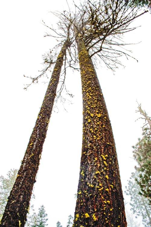 Imagine de stoc gratuită din arbori, buștean, codru