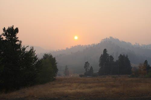 Photos gratuites de brume, feu de forêt, forêt, soleil