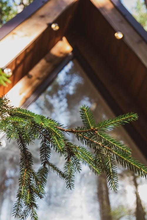 Fotos de stock gratuitas de bosque, cabina, de madera
