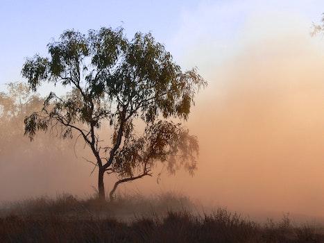 Free stock photo of #tree #sandstorm #bluesky #desert #alicesprings