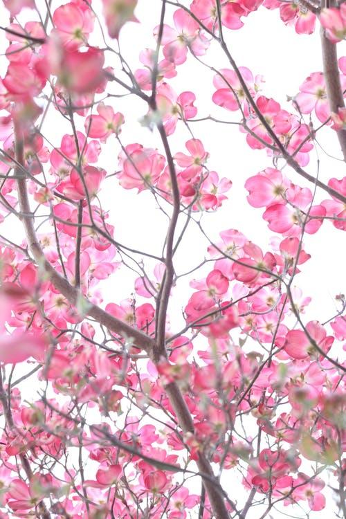 Základová fotografie zdarma na téma barvy, denní, flóra, fotografie znízkého úhlu