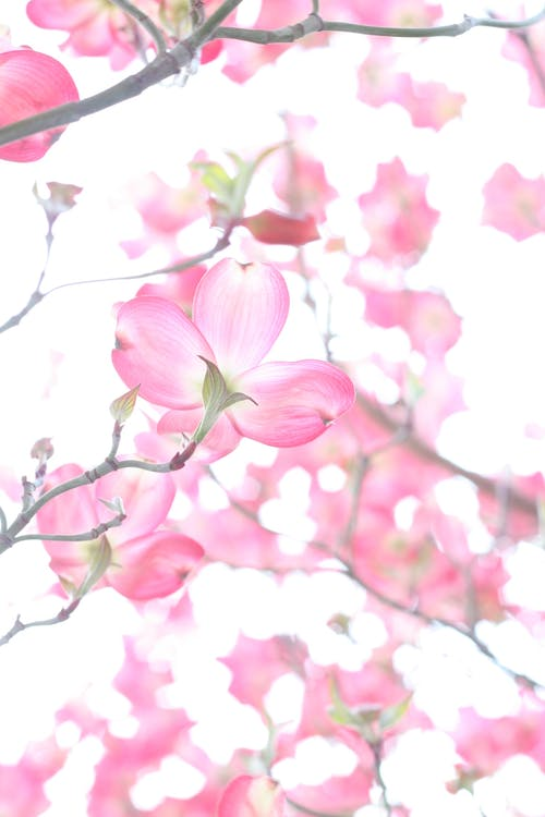 årstid, blomst, blomstre