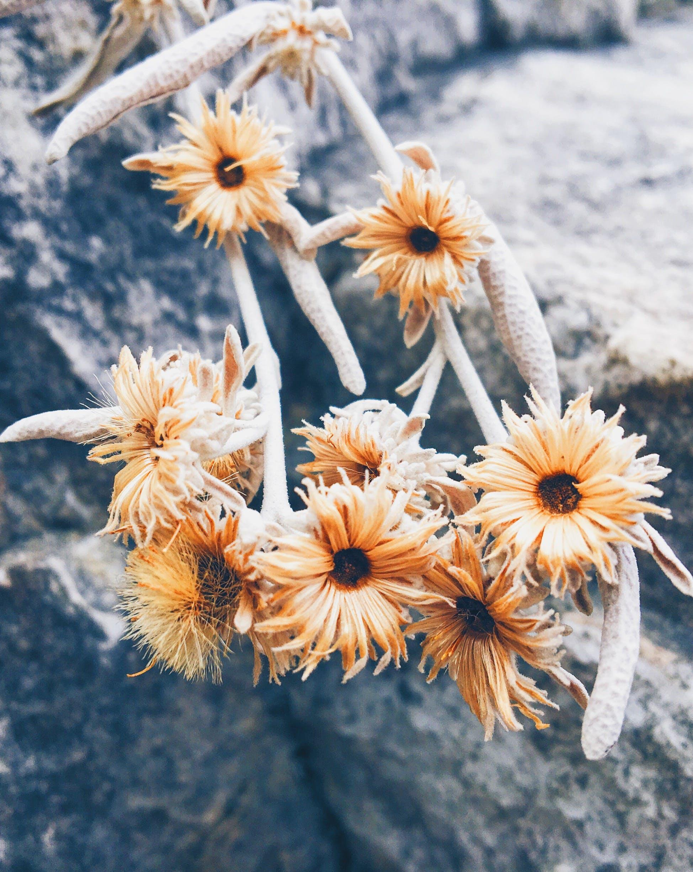 Beige Petaled Flowers