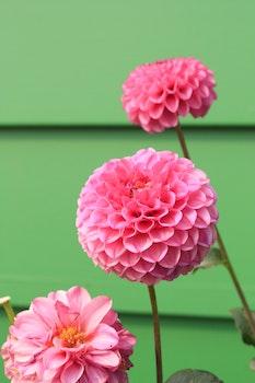 Macro Photography Pink Petal Flowers