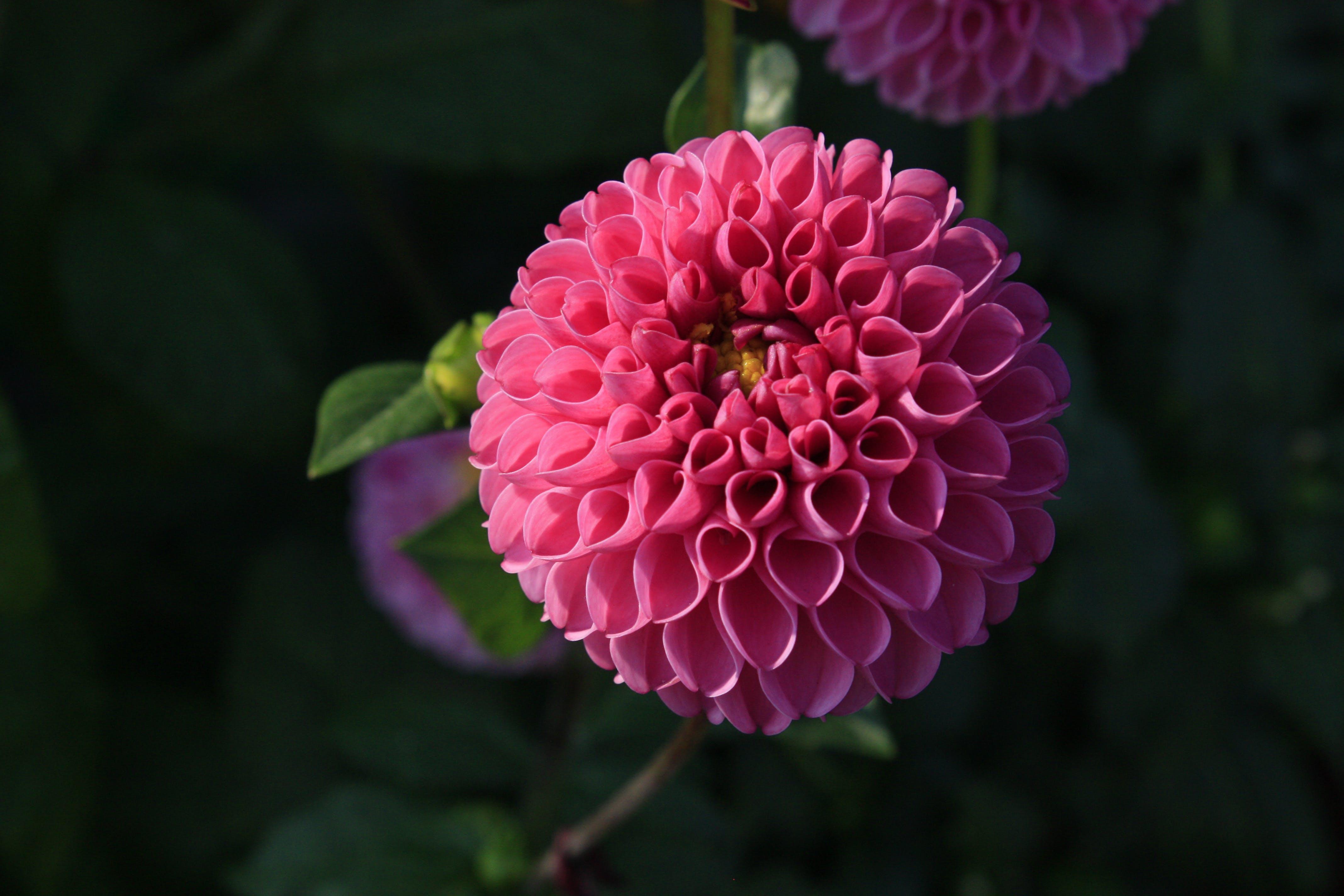 Безкоштовне стокове фото на тему «великий план, завод, квітка, макрофотографія»