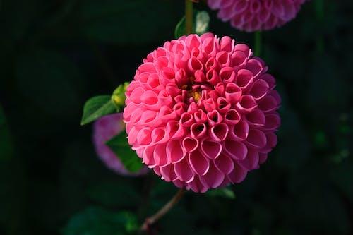 Photos gratuites de centrale, fleur, fleurir, flore