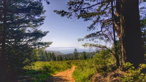 Kostenloses Stock Foto zu #muirwoods #nationalpark #california