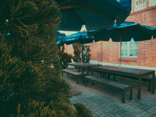 Základová fotografie zdarma na téma architektura, borovice, budova