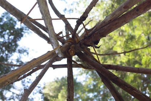 Gratis lagerfoto af grene, reb, skov